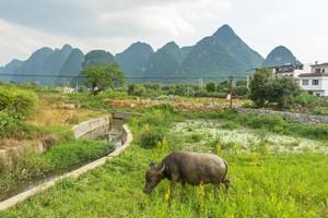 コロナ禍で在宅勤務が奨励されるようになり、田舎暮らしに興味を持つ人が増えているという。中国でもコロナ禍の影響で2020年には出稼ぎ労働者が初めて減少したと報じられたが、かといって中国の農村暮らしはまだまだ「厳しい」ようだ。(イメージ写真提供:123RF)